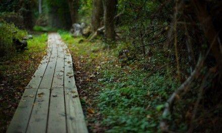 El sentido del caminar para el ser humano